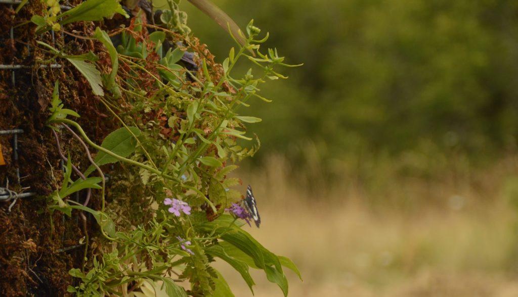Cycloasis - Biodiversité gravitant autours de la climatisation naturelle et circulaire